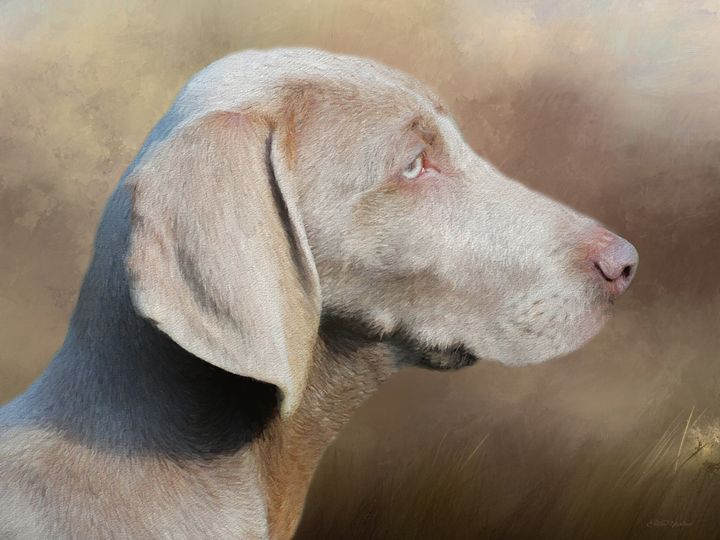 Weimaraner Adult - Painting - White Roe Art and Design