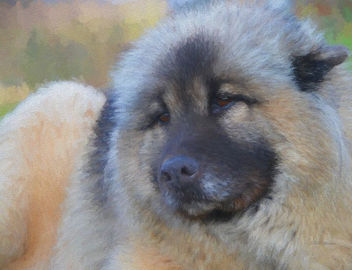 Sweet Face Of A Eurasier - Painting - White Roe Art and Design