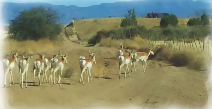 Pronghorn Antelope Herd Arizona - Pa - White Roe Art and Design