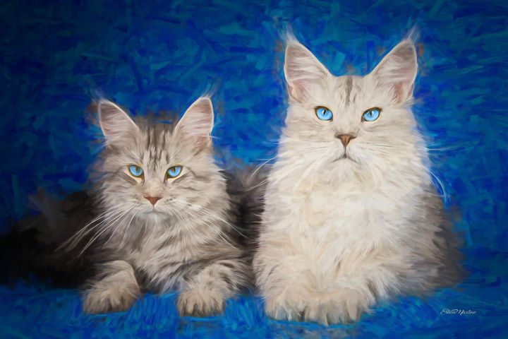 Maine Coon Kitties - Painting - White Roe Art and Design