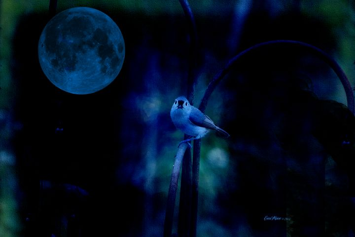 TITMOUSE IN THE MOONLIGHT - White Roe Art and Design
