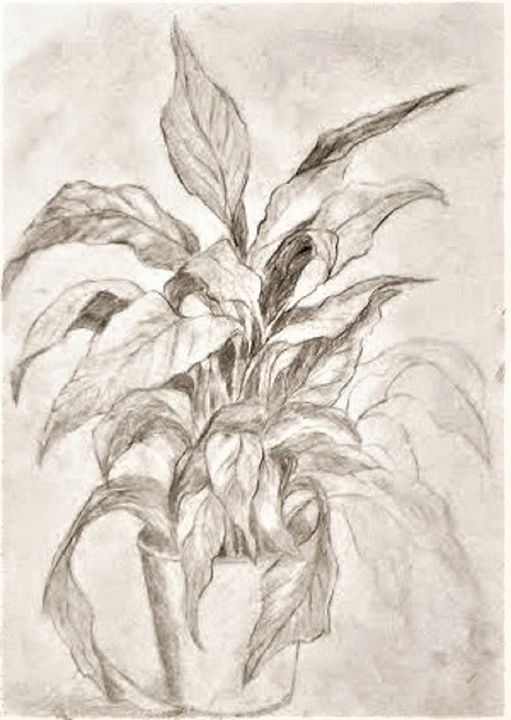 House plant - Liz Coppock