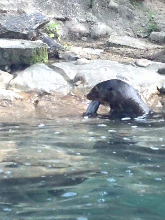Otter - Ayeisha Allen