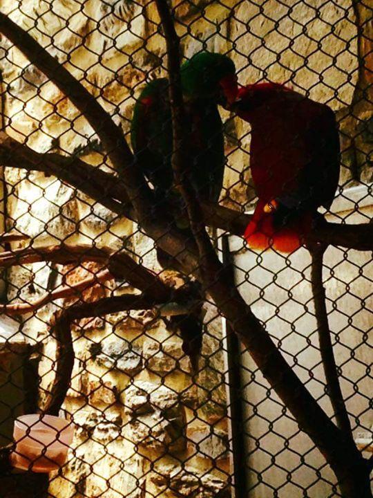 Love Birds - Ayeisha Allen
