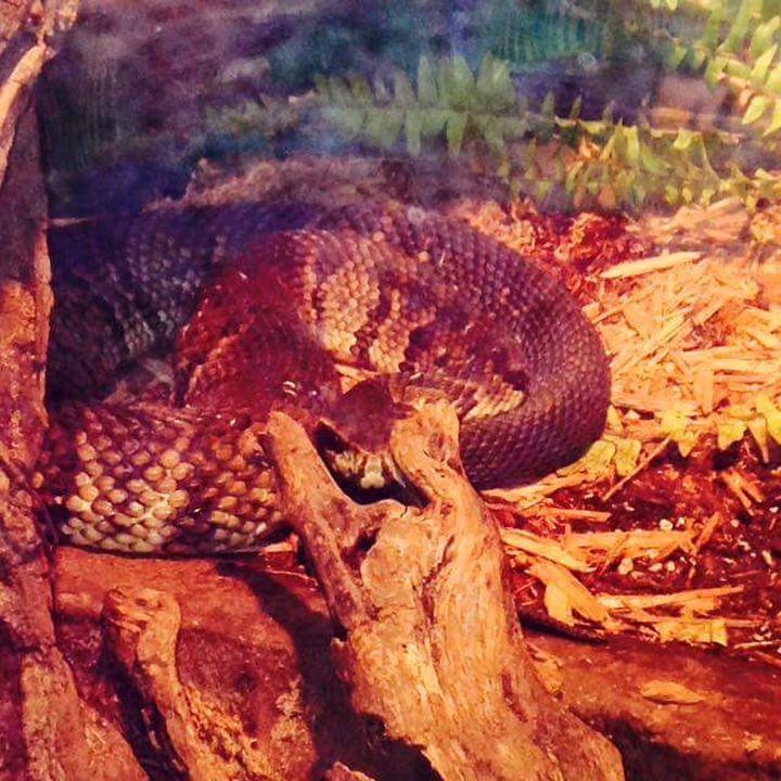 Snake - Ayeisha Allen