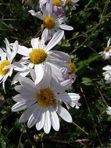 Petals, Carlene Buchanan - JA-Cantour