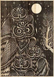Owl bird of night
