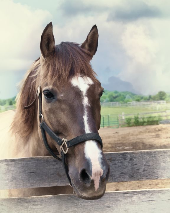 Brown Horse with Halter - Delores Knowles