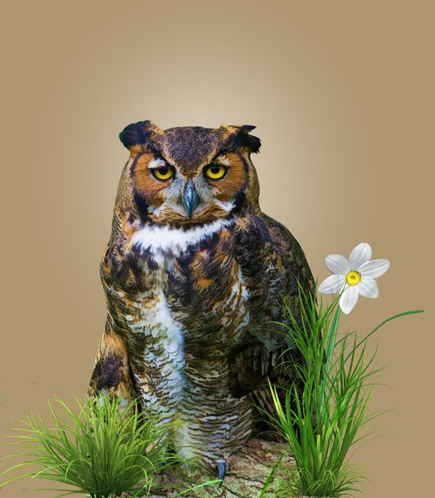 Great Horned Owl - Delores Knowles