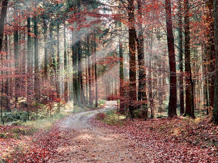 Red autumn in the woods - Christian Mueller