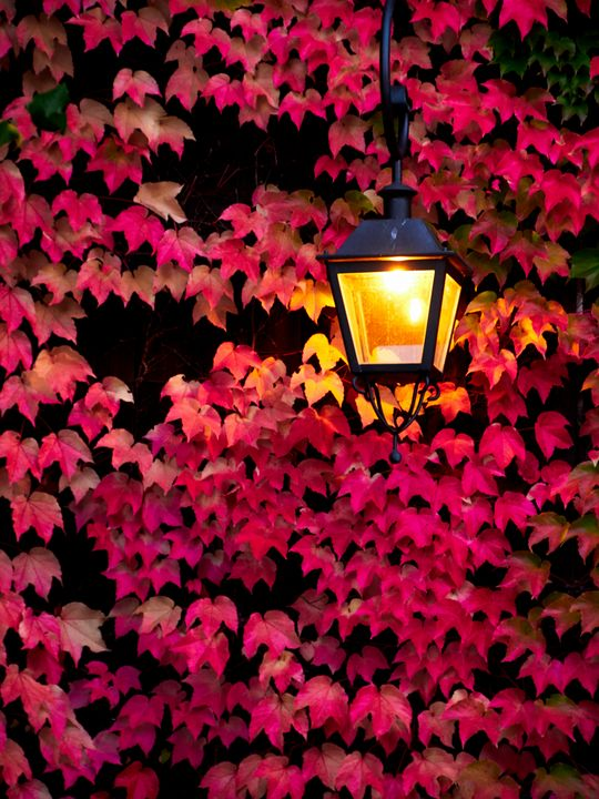Red leafs and lantern - Christian Mueller
