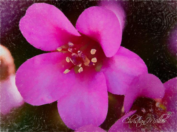Colorful lila flower - Christian Mueller