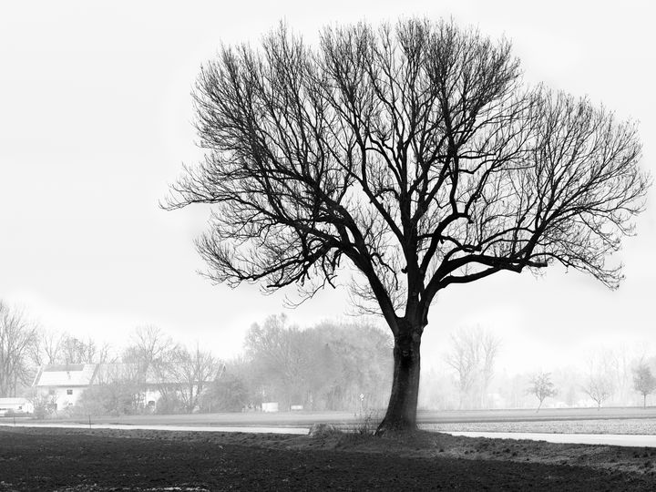 Lonesome tree in the fog - Christian Mueller