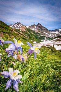 High Country Wildflowers Colorado