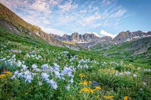 American Basin Colorado Wildflowers