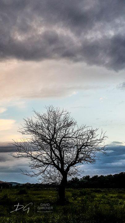 Lone Tree - David Gardner Photography