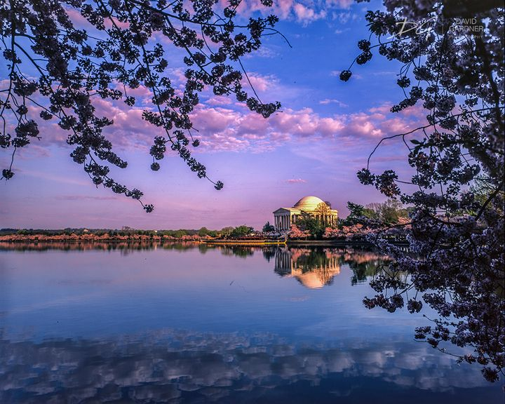 Sunrise over Cherry Blossoms - David Gardner Photography