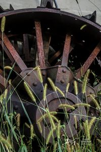 Tractor Wheel in the Grass