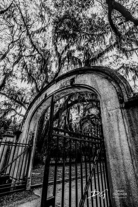Wormsloe Gate - David Gardner Photography