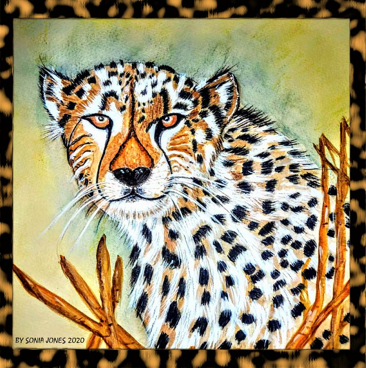 BIG CAT - Sonia Jones