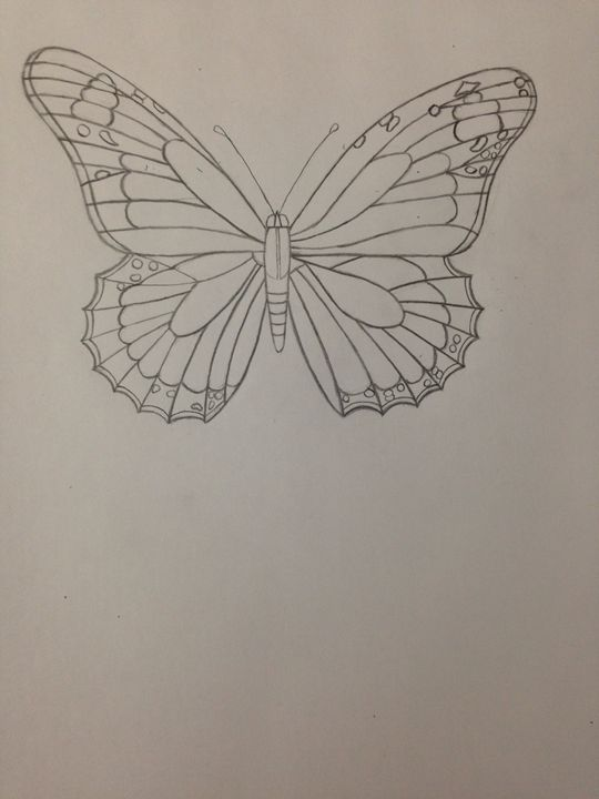 Butterfly Drawing -  Evelynabad14