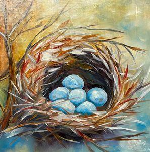 Robin spring eggs