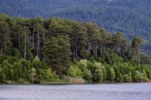 Feneos lake - Nature in your Home