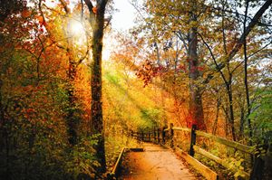 Sunrays through Autumn Path