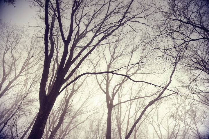 Spooky Forest - Nick Mateja Photography