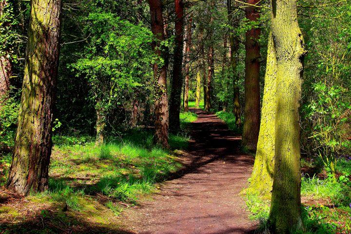 Woodland path - Ian Purdy