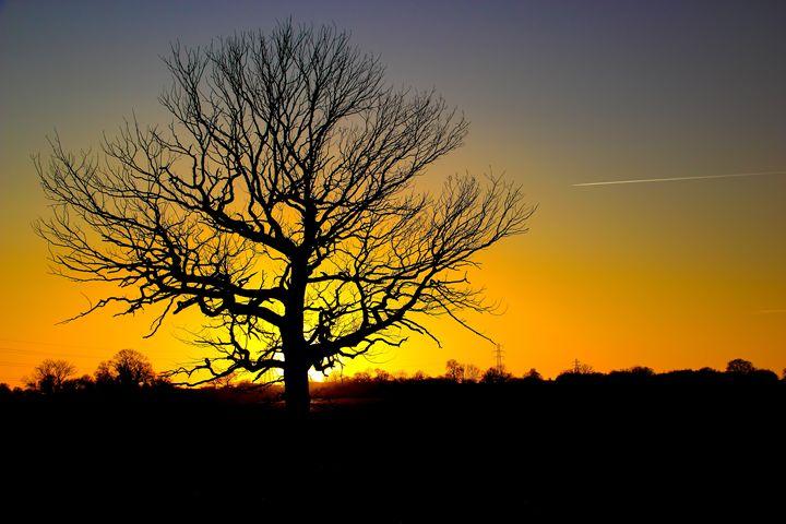 Lone oak tree - Ian Purdy