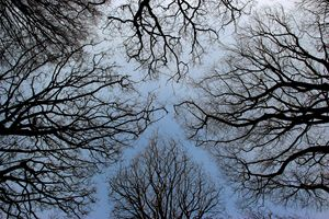 5 winter tree tops