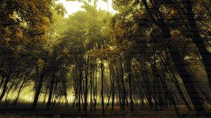 Haze Forest - Greg Fuse