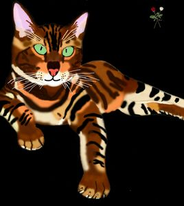 """Tabby Cat Beauty"""