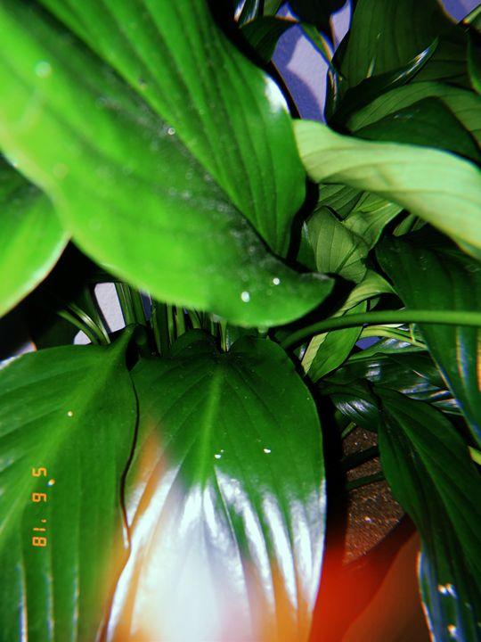 Close Plant Photo - Huckleberry Hobby