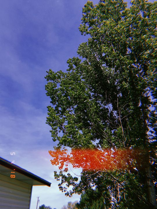 Tree Exposure Photo - Huckleberry Hobby