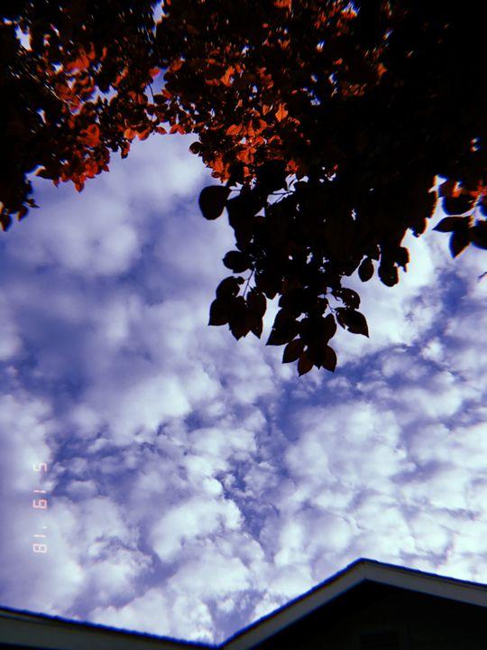 Cloudy Tree Photo - Huckleberry Hobby