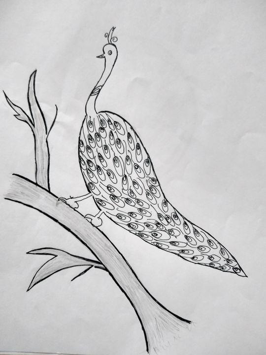 Peacock - NANDHINI