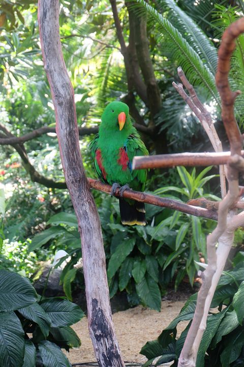 Peaceful bird - Michael L Childs