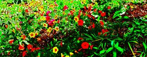 A Beautiful Meadow Of Flowers