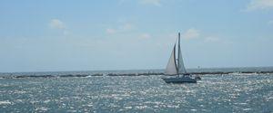 Wayward Sail