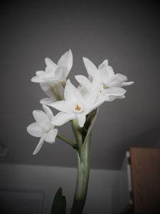 flower - GreyFox Crafts