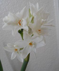 White Beauty - GreyFox Crafts
