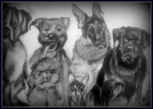 DOG CONFERENCE