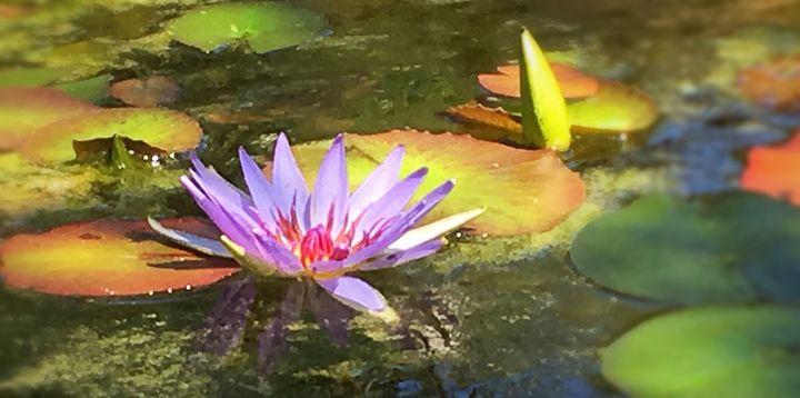 Lotus - Unseelie Muse