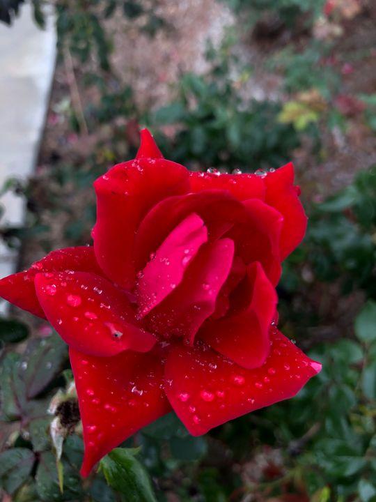 Dewdrops - Unseelie Muse
