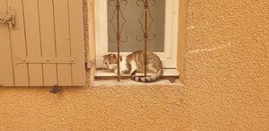 Convict Cat