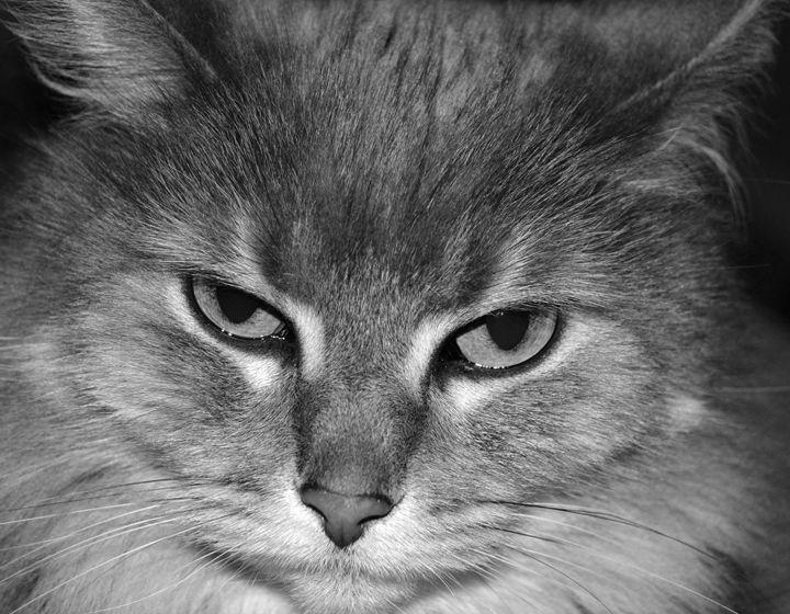 Sleepy Grumpy Cat - C. Fay Fine Art