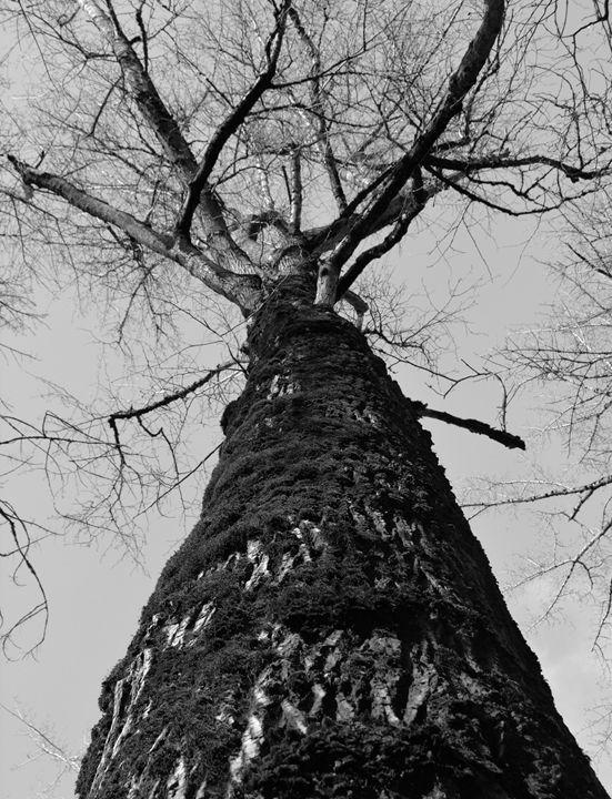 """Mossy Tree 2"" - C. Fay Fine Art"