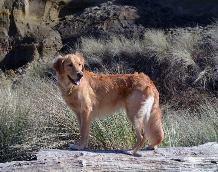 """Dog Day at the Beach 1"" - C. Fay Fine Art"